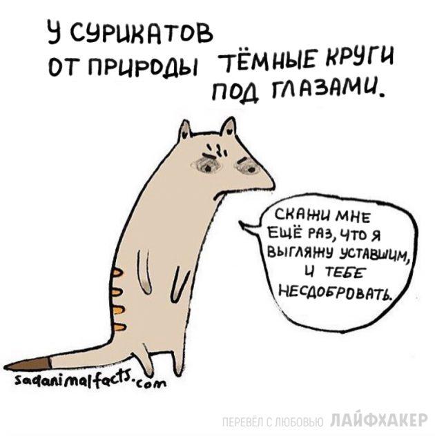 факты о животных 10