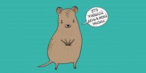 16 грустных фактов о животных