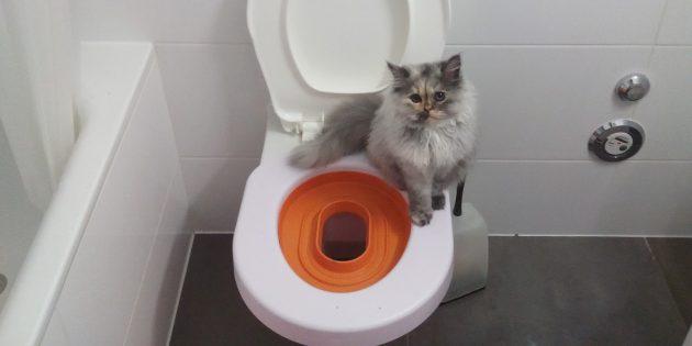 когда начинать приучать котенка к лотку