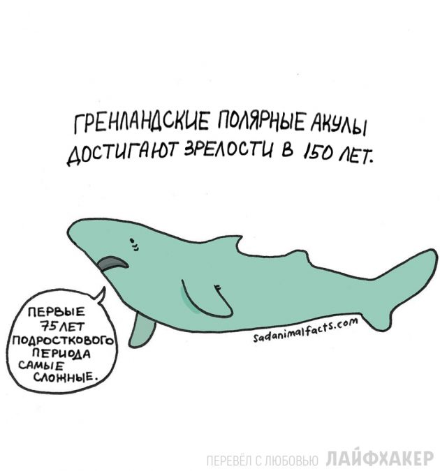 факты о животных 4