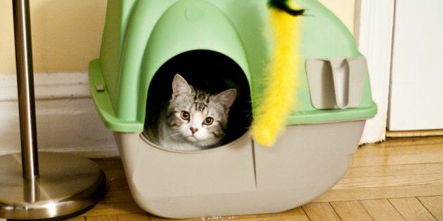 Как приучить котенка к закрытому лотку