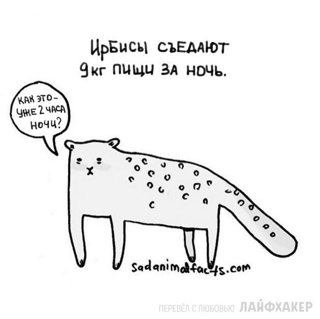 факты о животных 6
