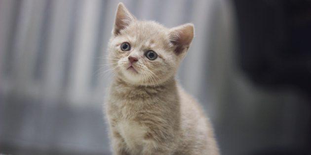 Что делать, если вы завели котёнка
