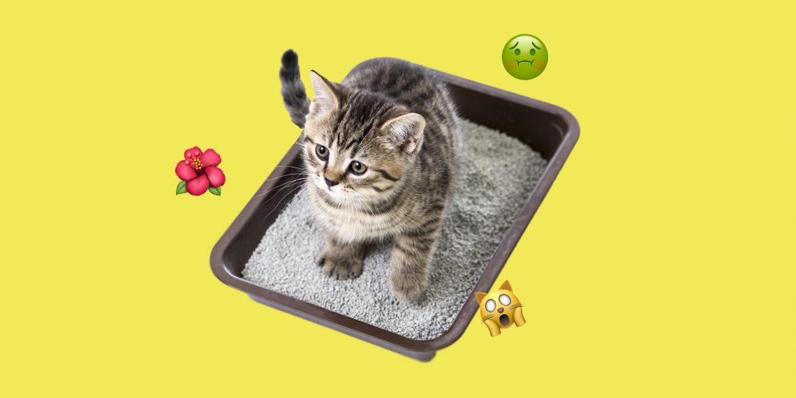 Как сделать чтобы не пахло кошачьей мочой 618