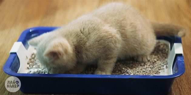 завести котёнка: туалет