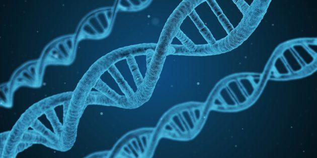 ГМО и ДНК