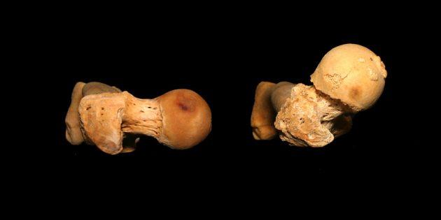 глубокий присед: головка бедренной кости
