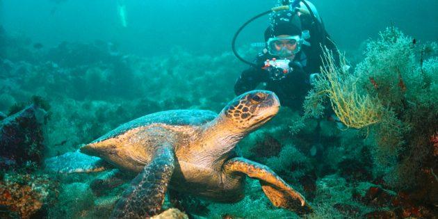 Куда поехать в октябре: Галапагосские острова, Эквадор
