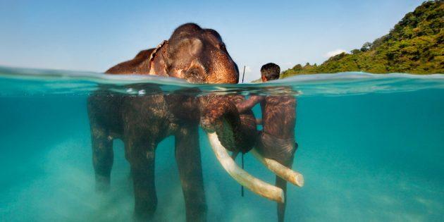 Куда поехать в ноябре: Андаманские острова, Индия