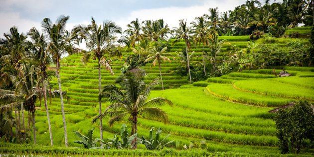 Туры на Новый год в Индонезию, остров Бали