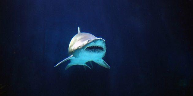 выжить в море: как защититься от опасностей