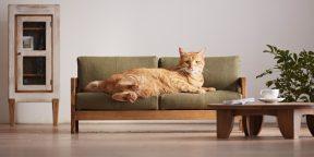 Новый тренд — мебель для животных