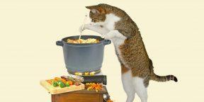 Как превратить кота в циркача