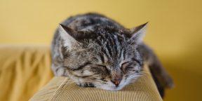 Как спать меньше и успевать больше