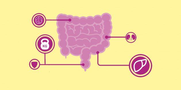 6 необычных фактов о том, как кишечник влияет на всё тело