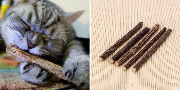 Кошачьи палочки