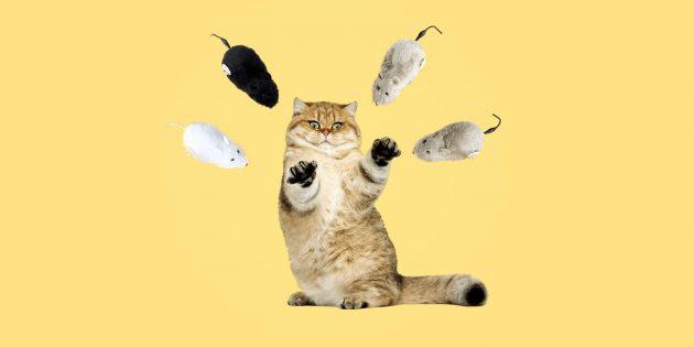 35 крутых товаров с AliExpress для кошек и их владельцев