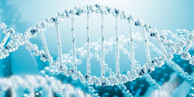 Генетические предсказания