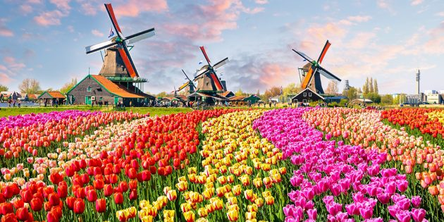Куда поехать в апреле: Лиссе, Нидерланды