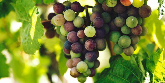 Как выбирать виноград
