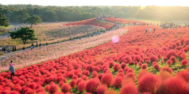 Хитачи, Япония