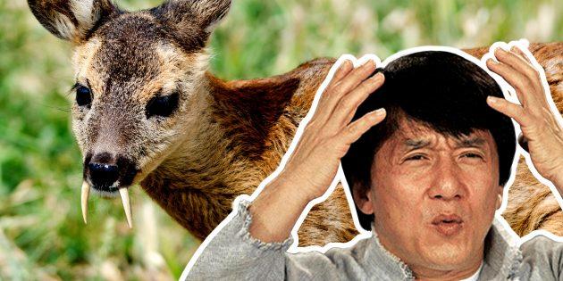 ТЕСТ: Настоящее животное или фотошоп? Угадайте по картинке