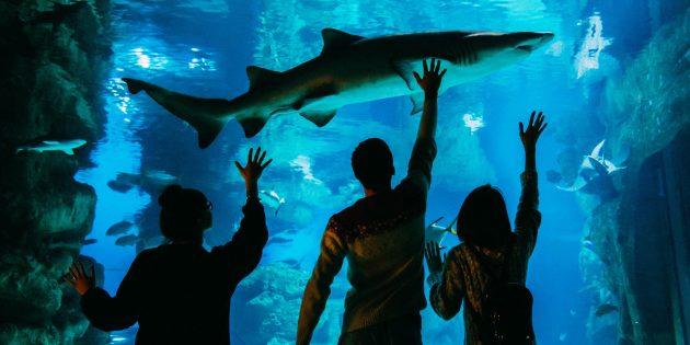 Москвариум: дети в океанариуме