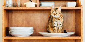 Советы кошатникам: как сохранить дом чистым, а кошку — здоровой