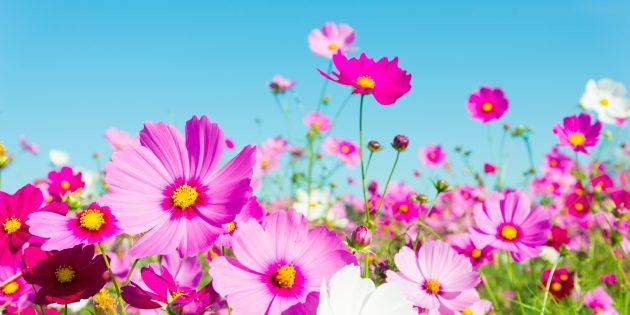 15 красивых однолетников, которые цветут всё лето
