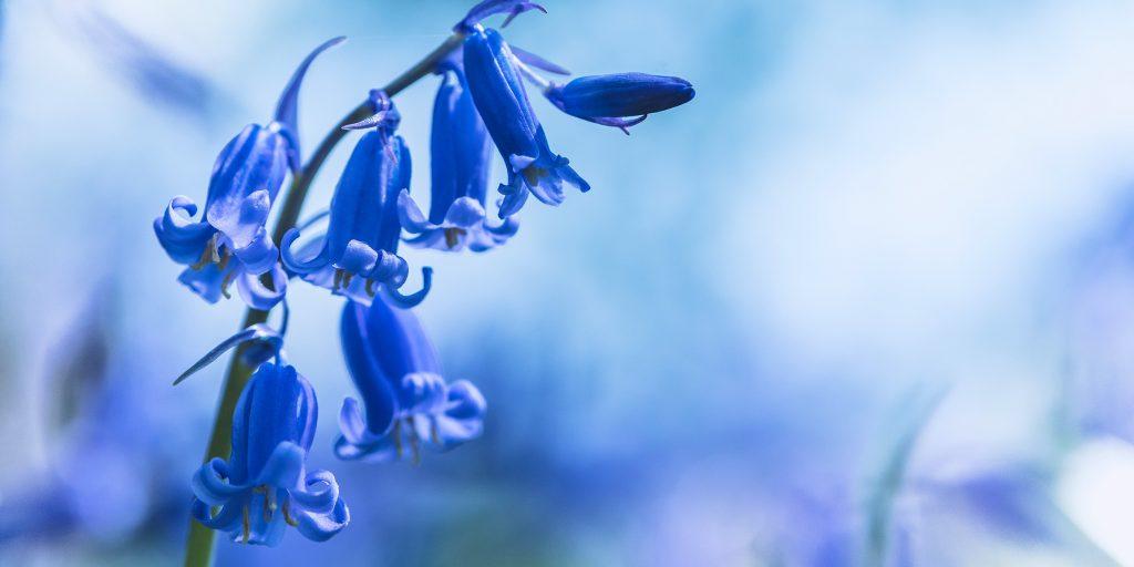 Цветы по сезонам цветения