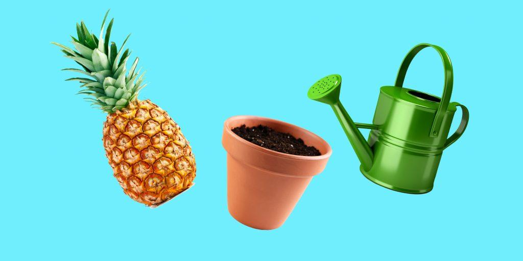 Как посадить ананас из верхушки в домашних условиях пошагово Фото Видео