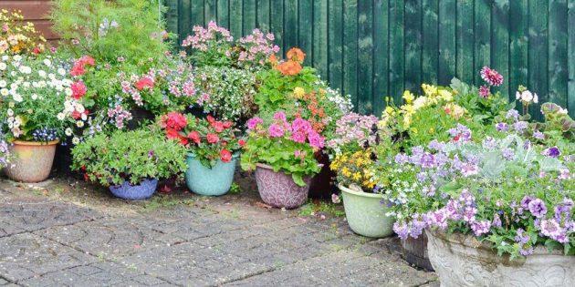 Как сделать клумбы из цветочных горшков