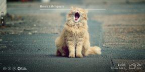 My Cats — шикарные котики в вашем Chrome