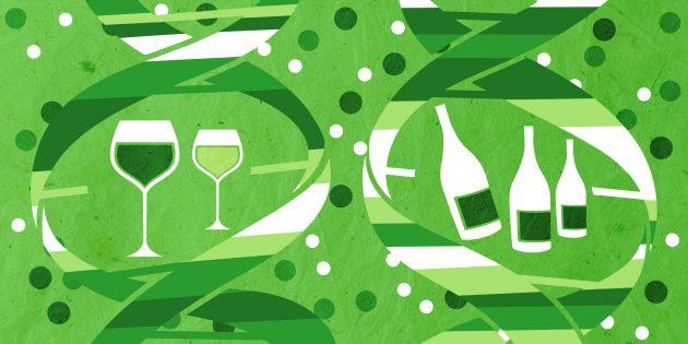 MyGenetics: алкоголь