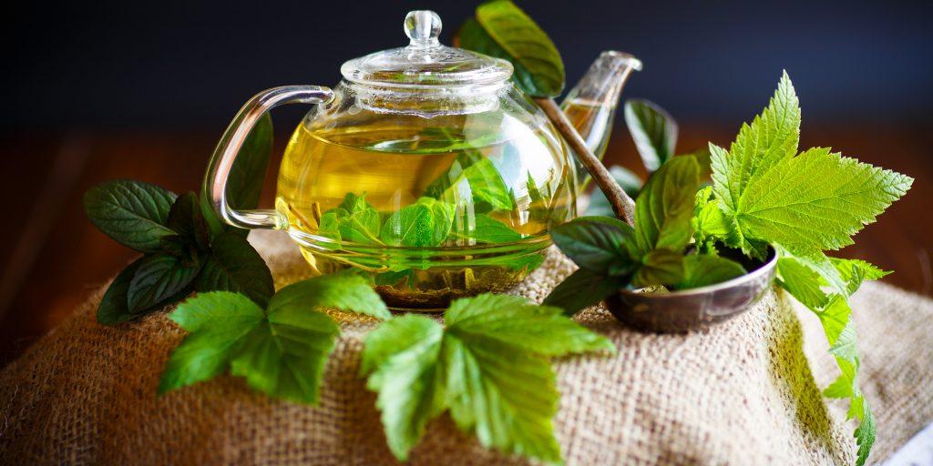 Когда собирать и как сушить листья смородины на зиму для чая