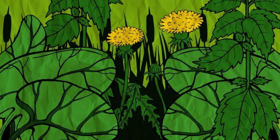 12 растений, которые не дадут умереть от голода в дикой природе