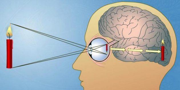 Особенности зрения: Перевёрнутое зрение