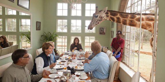 Покорми жирафа: 8 самых необычных отелей мира