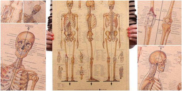 Плакат «Скелет человека»