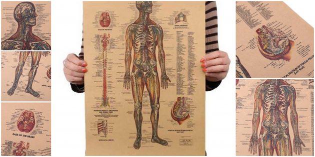Плакат «Нервная система человека»