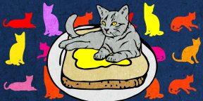 15 мифов о кошках и их разоблачение