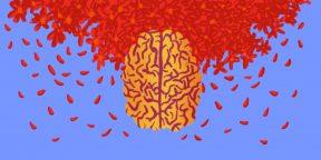 Как меняется мозг в течение менструального цикла