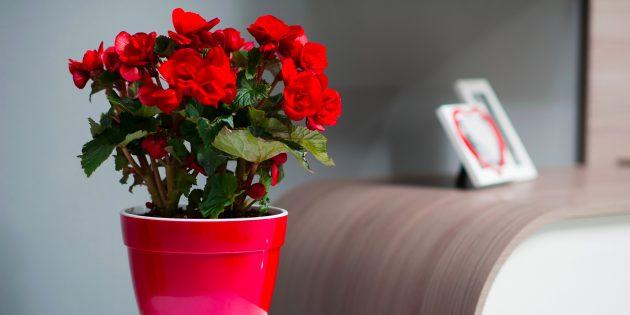 Неприхотливые комнатные растения, которые будут цвести до весны