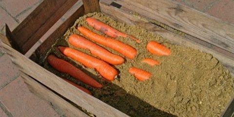 Как хранить морковь в ящиках: Чередуйте слои, пока не закончится морковь