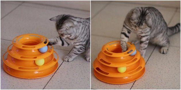 Игра для кота
