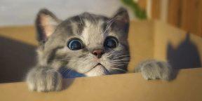 Как фотографировать котиков: 19 советов от профессионала