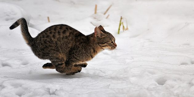 Фотографии котиков: заранее настройте камеру