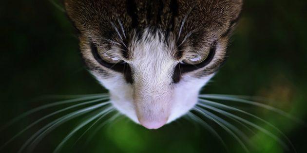 Фотографии котиков: придумайте название для снимка