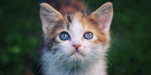 Фотографии котиков: фокусируйтесь на глазах