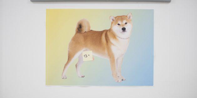 Люди Лайфхакера: Собачка с пронзительным взглядом